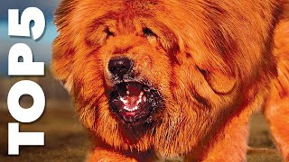 TOP 10 Nejdražší psí plemena