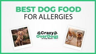 Best Dog Food For Allergies - 2020