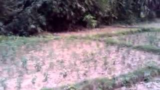 preview picture of video 'Ganeshpur Village of Bardiya District in Nepal'
