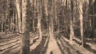 When I was in my Prime - A walk in the wood - TWO