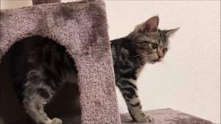 キャットタワーの穴の中に引きこもってしまった子猫