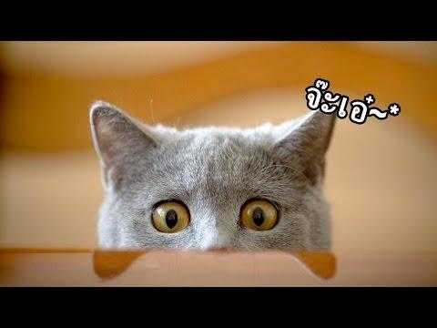 ถ้าหนอนลูกแมวอังกฤษ