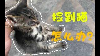 【科普】突然捡到一只猫,你该怎么办?可不是洗个澡这么简单!记录UP主捡猫全过程,看完这个视频你就离有猫不远了!