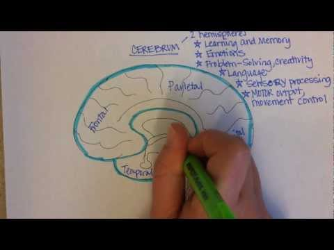 Brain Regions Overview (video)