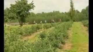 preview picture of video 'Plantacja borówki amerykańskiej w Jabłonicy'