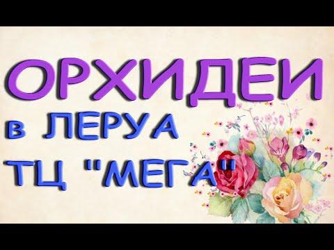 """ОРХИДЕИ в ЛЕРУА ТЦ """"Мега"""",13.09.21,Самара."""