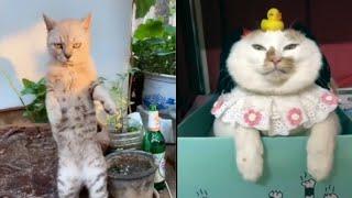 Meilleures Vidéos Drôles de Chat et de Chien 🐶🐱- Best Funny DOGS et CATS #77