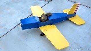 Squirrel Steals Airplane