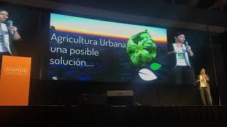 Block Farms en Animus 2018