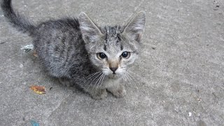 Someone abandoned two kittens and brought them to my yard - Video Youtube