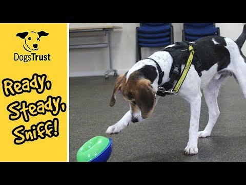 Ready, Steady, Sniff! | Dogs Trust Loughborough