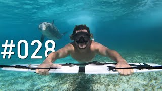 Wondrous Underwater Surfing With Dolphins!