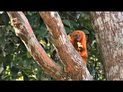Parque Mico-Leão-Dourado mostra a diversidade da fauna e flora de Cabo Frio