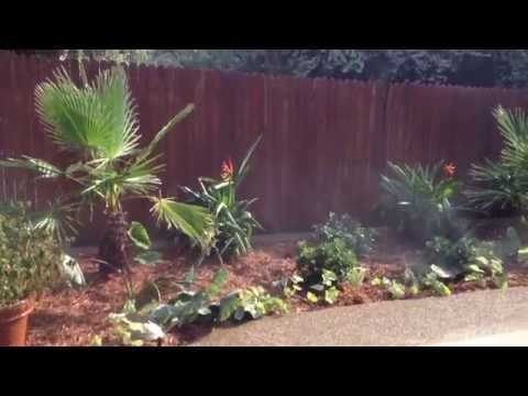 fort worth landscape company tropical