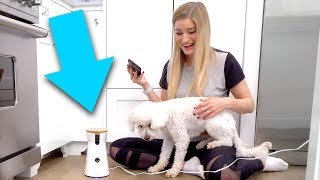 🐶 iPhone Dog Treat Tosser!