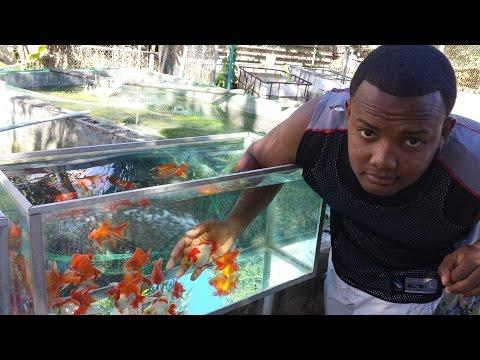 como elaborar alimento para goldfish casero