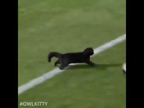 Gooooooaaaaaaaaaaal owl kitty