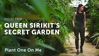 Queen Sirikit Botanic Garden Limestone Plants Tour — Plant One On Me — Ep 135