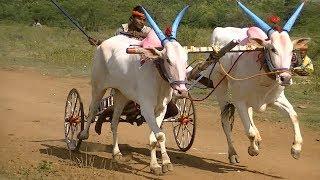 Bullock Cart Race Lokapur.Part 4.