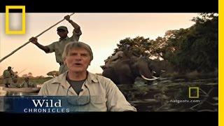 Elephants at Play | National Geographic thumbnail