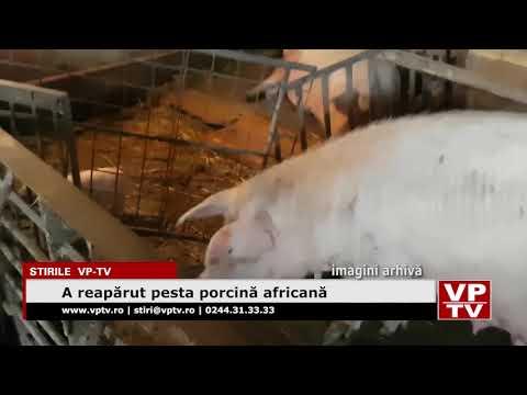 A reapărut pesta porcină africană