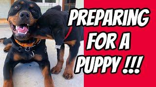 Rottweiler Puppy Tips
