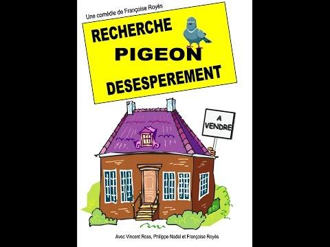 Recherche pigeon d�sesp�r�ment