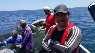 Big Catch In Brunei