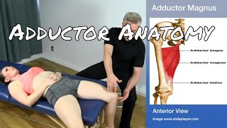 Anatomy & Palpation of the 5 Adductor Muscles