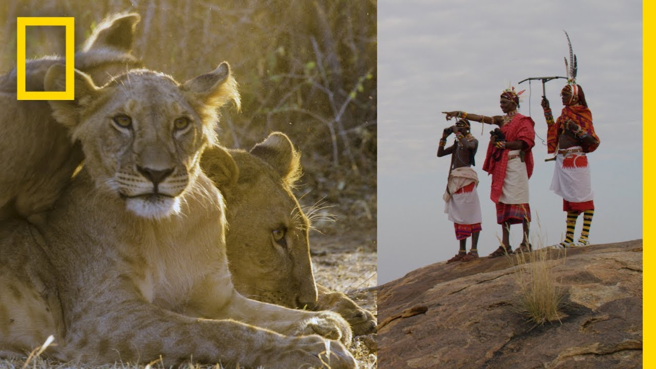 These Warriors Once Hunted Lions—Now They Protect Them | National Geographic thumbnail