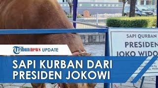 Penampakan Sapi Kurban Jokowi dari Probolinggo Berbobot 1,2 Ton Tiba di Surabaya, Dijaga 6 Petugas