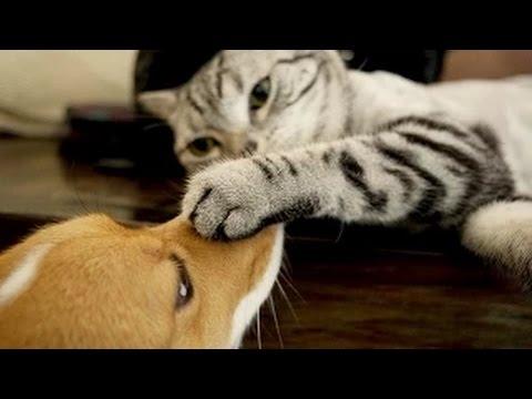 חיות שנהנות מהחיים - מקסים!