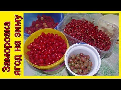 Заморозка ягод на зиму. Как заморозить ягоды.