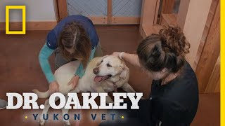 An Elderly Dog Gets an Exam | Dr. Oakley: Yukon Vet