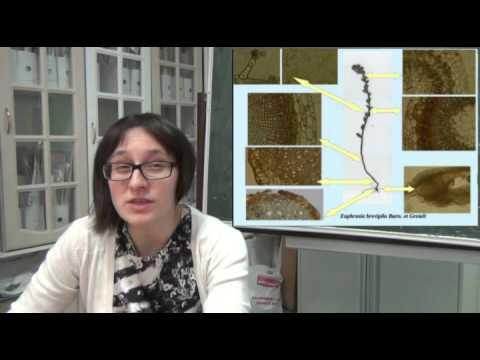 Биорезонансная диагностика паразитов стоимость