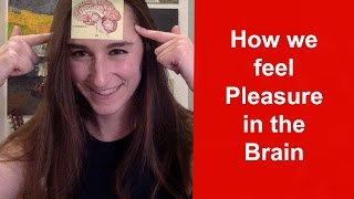 How Our Brains Feel Pleasure (Pleasure in the brain)
