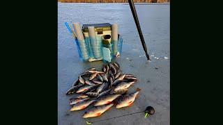 Сахривер отчет о рыбалке за февраль 2020