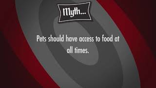 Tall Tails: Do Pets Need Access To Food All Day?