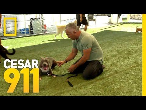 Basic Obedience Training | Cesar 911