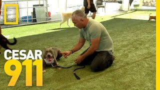 Basic Obedience Training | Cesar 911