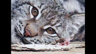 Прояснение ситуации по животным, центр реабилитации диких животных