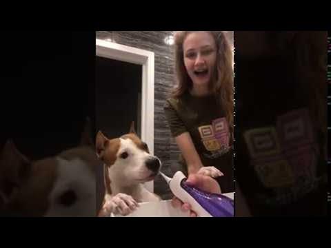 הכלב המצחיק הזה פשוט אוהב לצחצח שיניים!