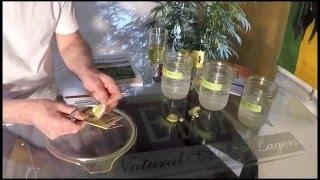 marijuana seed germination
