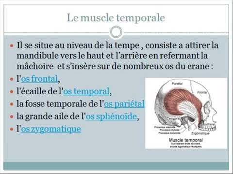 Que retirer la douleur dans les muscles de lacide lactique