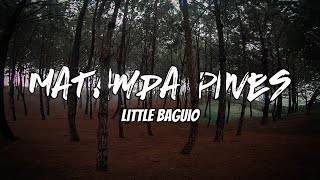 Matampa Pines | Little Baguio | Cinematic FPV