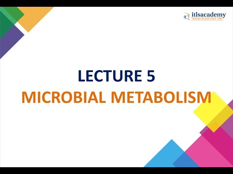 Microbial metabolism Part 1