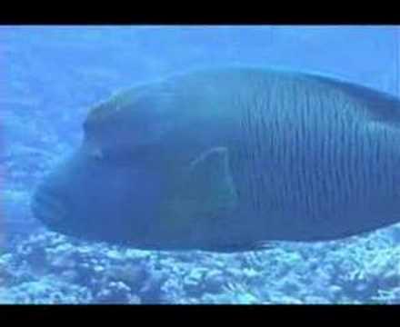 Sharm Fugani - Hausriff Mangrove Bay - El Quseir, El Quseir - allgemein,Ägypten