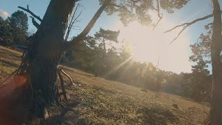 Summer vibes - FPV DRONE