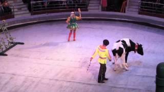 Дрессированные коровы, умные медведи и овцы и их друзья