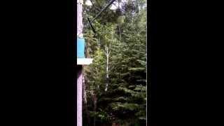 preview picture of video 'Parc arbre en arbre Rouyn-Noranda tyrolienne'